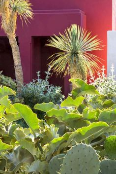 A secret garden in the heart of Marrakesh | Home | The Times & The Sunday Times
