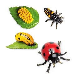 Safari Ltd. Garden Animals, Insects, Jar, School, House, Ideas, Biology, Home, Thoughts