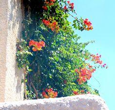 Flowers in Crete http://mk-libelula.blogspot.com/2013/06/walking-in-mediterranean-garden.html