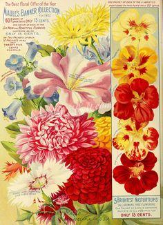 008-Imperial Sweet Sultans, Petunia, Whitlavia, Nasturtium, Zinnia, Pinks, Aster      ...
