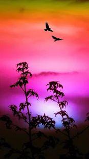 Dream Sky Wallpapers- screenshot thumbnail