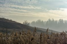 Misty morning - A misty mornin in Csikszereda/Miercurea Ciuc, Harghita county, RO