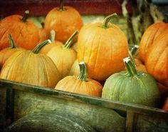 I love pumpkins....