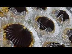 """""""حلويات جزائرية"""" بريستيج 2018 صابلي العقيقة بذوق الليمون مع ام جنى - YouTube"""