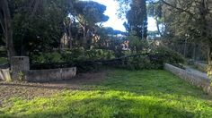 Alberi caduti a Roma