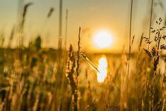 Abendstimmung #leipzigleuchtet #neuesvomfotokombinat  #leipzig #thisisleipzig #ig_leipzig #leipzigliebe #loveleipzig #lieblingsleipzig #leipzigtravel #leipzigcity #sogehtsaechsisch #simplysaxony #like #follow #instalove #sonyalpha #neuseenland #cospudenersee #libelle #dragonfly #sunset #sonnenuntergang #abendlicht