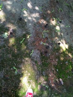 Moss and my shoe Stepping Stones, Trees, Shoe, Natural, Outdoor Decor, Flowers, Plants, Pictures, Photos