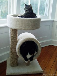 The cat shelter is absolute needs. Most cats owners don't have a cat house but they usually let them sleep in any place like on the couch, table Inside Home, Cat Scratcher, Cat Room, Pet Furniture, Pet Home, Animal House, Animal Shelter, Cat Lovers, Cool Designs