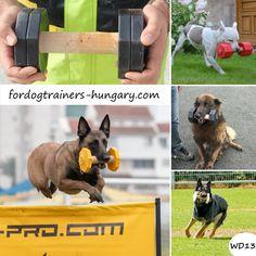 Az apportfa 1 kg «Játszópajtás Fa, Dogs, Animals, Animales, Animaux, Pet Dogs, Doggies, Animal, Animais