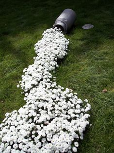 Spilled milk: some tiny white flowers and an old milk can. You could also use old paint cans and different colored flowers.