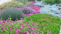 Groundcovers for hellstrip gardens