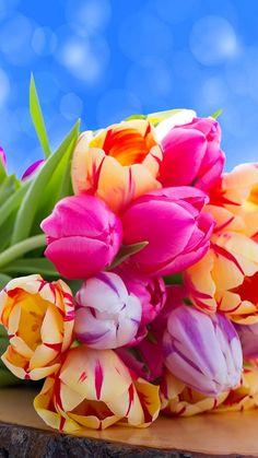Tulip's