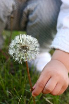 Dandelion wishes to a wee  little one....