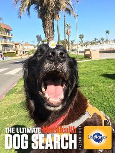 Help my pooch become The Ultimate Men's Health Dog. Vote Today! #MHDogContest