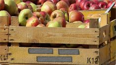 3 ideas con huacales para organizar - Crear y Reciclar Unique Woodworking, Woodworking Tips, Fruit Trees, Fruit Fruit, Healthy Fruits, Apple Tree, Wooden Boxes, Agriculture, Vitamins