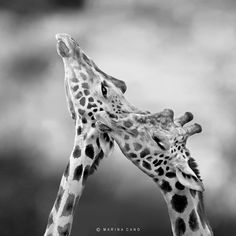 Photograph We are Beautiful by Marina Cano on 500px