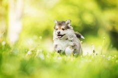 aww.. ❤️❤️❤️  #dog #dogs #dogsperts #pets #love #doglovers #cute #cuteness #cuteanimals #puppies #pup #pups #happydog #fun #happiness #ilovemydog