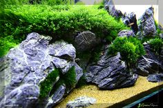 Moss love rock! Aquascape