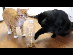 5 Great Hacks Fur Cat Owners - We Love Cats and Kittens