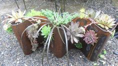 Table top or on a garden wall, this piece is planted with drought tolerant sedums.