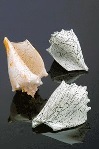 1000 images about silkwood glass on pinterest conch Silkwood glass