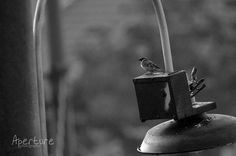 sparrows - rains studio eternalize your moments, check our tweets and follow us on twitter @RainPictureMLG