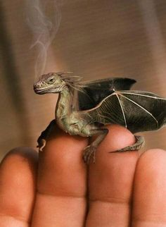 If only InGen could genetically engineer a tiny dragon for me. But then I'd have to feed it crickets, and I'm too squeamish for that. Maybe they'd make dragon pet food. Dragon Pet, Tiny Dragon, Dragon Lady, Water Dragon, Little Dragon, Green Dragon, Dragon Wing, Welsh Dragon, Dragon Scale