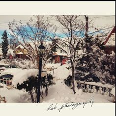 """""""Snow??what snow""""!!!by me dsb_photography"""