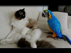 He's SO Confused By His New Parrot. Now Watch The Hysterical Thing He Does Next... - LittleThings.com