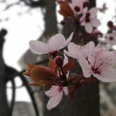 #huaweip9 #leica #ñuñoa #primavera