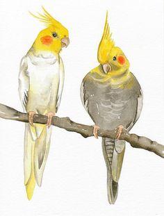 Bird Art Print, Limited Edition 8x11 - COCKATIELS - Original Watercolor Painting by Lorisworld
