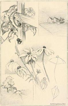 drawing flowers, sketching flowers, beginner art book, free beginner art books