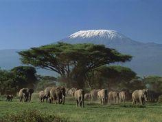 Mt. Killamanjaro