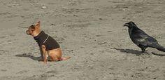 Gifs divertidos con animales para enviar online gratis.