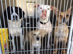 Gorgeous family impounded after they were found living in a car- please help!!!!