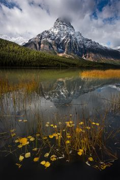 Waterfowl - Mount Chephren reflecting in lower Waterfowl Lakes located in the Mistaya River Valley of Banff National Park