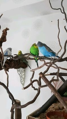 Angry Birds Full Movie, Diy Bird Toys, Pet Bird Cage, Baby Animal Videos, Bird Gif, Bird Aviary, Birds And The Bees, Colorful Birds, Exotic Birds