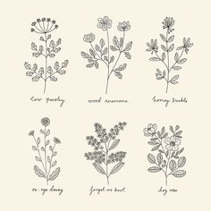 Ryn Frank is a freelance illustrator, specialising in hand drawn illustrations. Line Art Flowers, Flower Line Drawings, Botanical Line Drawing, Simple Line Drawings, Line Flower, Flower Sketches, Botanical Drawings, Botanical Illustration, Flower Art