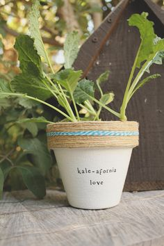 6 Kale-afornia Love Kale Plant Indoor and Outdoor Pot