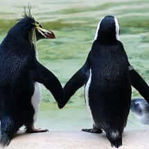Two Penguins Holding Hands at the London Zoo