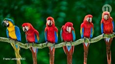 New evidence suggests that macaws were a status symbol for prehistoric Native Americans, who imported them and farmed them for feathers. #Beautiful #Nature #Entertainment #Animal #Style #Tattoos #Funny #DIY