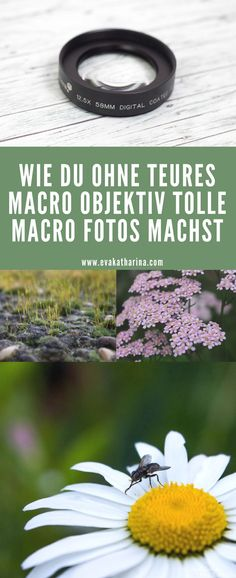 Low Budget: Macro Fotografie ohne Macro-Objektiv Here you will find out how you can make macro photos without Macro lens.