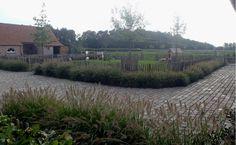 VDBK te Castelré (NL) Vineyard, Outdoor, Green, Outdoors, Vine Yard, Vineyard Vines, Outdoor Games, The Great Outdoors