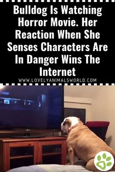 Bulldog Is Watching Horror Movie. Her Reaction When She Senses Characters Are In Danger Wins The Internet - Lovely Animals World Scary Movies, Horror Movies, Animal Articles, Cat And Dog Videos, Interesting Animals, Dog Stories, Cute Dogs And Puppies, The Villain, Animal Memes