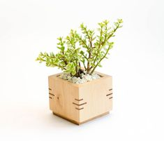 Wooden Planter Box Square Planter Succulent Planter Maple Wood Planter Desk Accessory Wood Home Decor Modern Planter Awesome Woodworking Ideas, Woodworking Box, Woodworking Furniture, Woodworking Workshop, Woodworking Techniques, Wooden Planter Boxes, Wood Planters, Planter Pots, Wooden Centerpieces