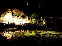 Bali Lotus pond Ubud