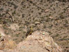 #pajaro #bird