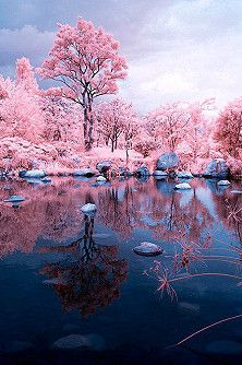 reflections in pink...