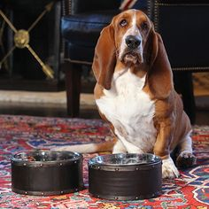 These stylish dog bowls are made from reclaimed steel drums. The Briggs dish is environmentally friendly, but has an industrial design. Each bowl has a unique color and texture that will add beauty an