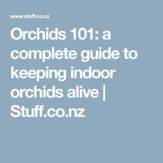 Orchids 101: a complete guide to keeping indoor orchids alive | Stuff.co.nz